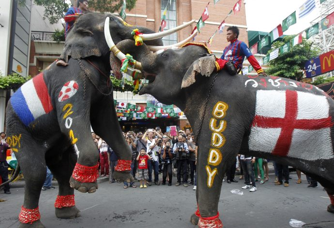 Elephants painted with flags of France and England (R) perform to celebrate the 2014 World Cup in Brazil, as hundreds of people watch along the Khaosan tourist street, in Bangkok June 13, 2014. The performance was part of an event arranged by the Khaosan Road business association in a bid to boost tourism under the current curfew, according to the association. REUTERS/Chaiwat Subprasom (THAILAND - Tags: SPORT SOCCER WORLD CUP TRAVEL ANIMALS) - RTR3TL0X